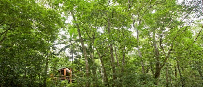 8 wonderful ethical hotel in Australia CanopyTreehouses2 feature